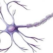 Images neurone